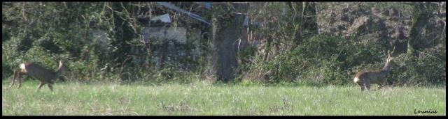 http://elionae.cowblog.fr/images/IMG5897-copie-2.jpg