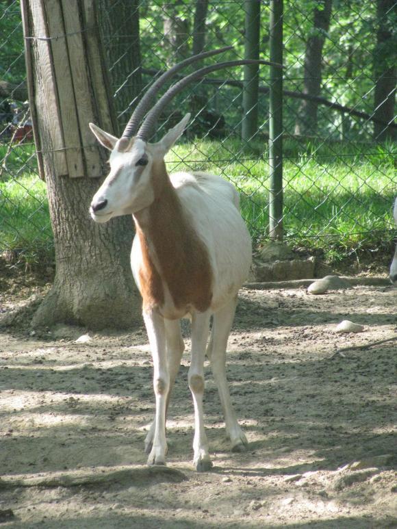 http://elionae.cowblog.fr/images/IMG6224.jpg