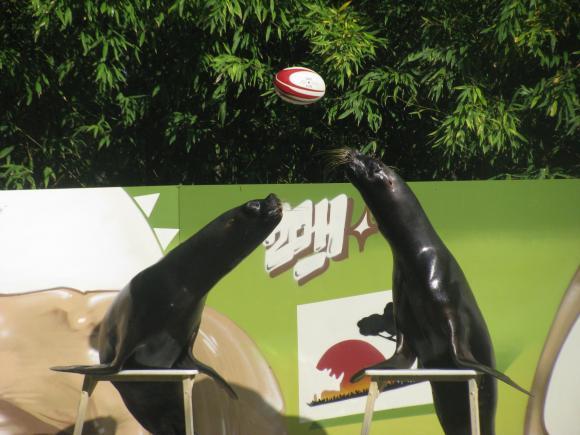 http://elionae.cowblog.fr/images/IMG6233.jpg