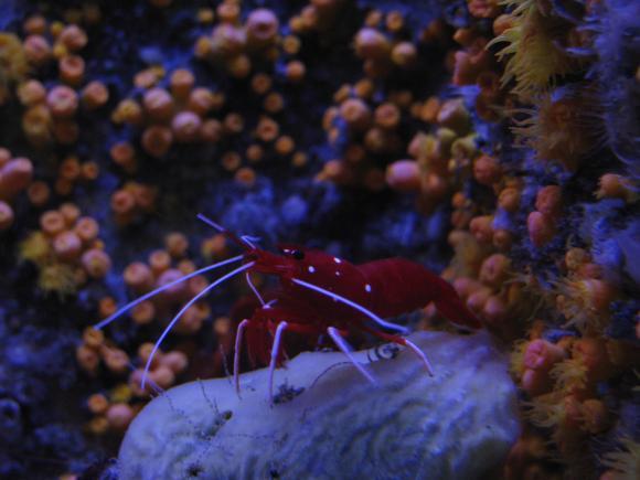 http://elionae.cowblog.fr/images/IMG7514.jpg
